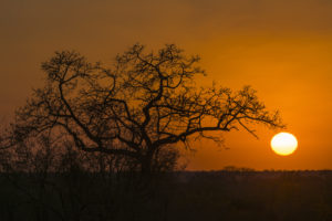 Early-morning-sunrise-on-safari-in-South-Africa